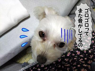 20168112_2